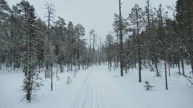 2019-03-finlandia-dia-5-26-hacia-martinselkonen