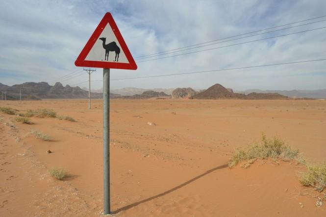 2019-01-jordania-wadi-rum-carretera-camello.jpeg