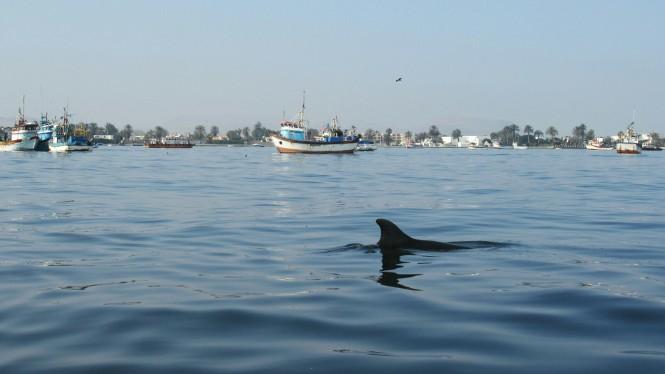 2019-08-peru-tour-islas-ballestas-06-delfines