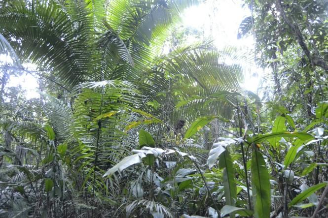 2019-09-iquitos-pacaya-samiria-31-paseo-jungla
