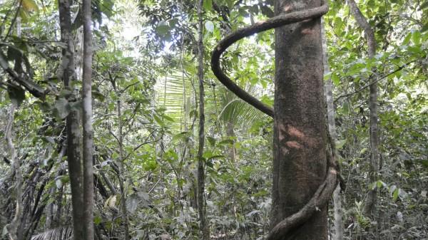 2019-09-iquitos-pacaya-samiria-34-paseo-jungla