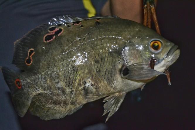 2019-09-iquitos-pacaya-samiria-41-pesca-nocturna-oscar