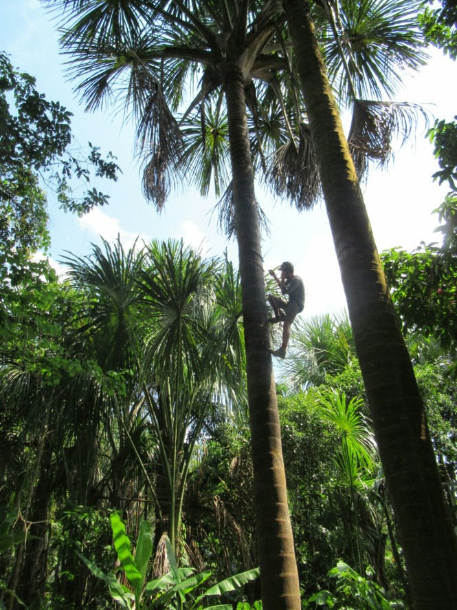 2019-09-iquitos-pacaya-samiria-51-trepar-palmera