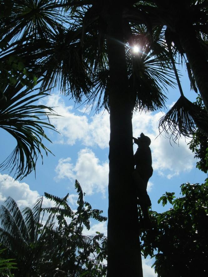 2019-09-iquitos-pacaya-samiria-52-trepar-palmera