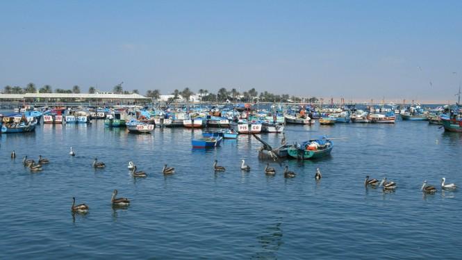 2019-08-peru-tour-islas-ballestas-36-puertos