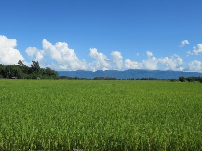 2019-10-myanmar-indawgyi-Lwemun-03