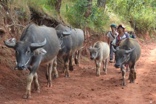 2019-10-myanmar-trekking-kalaw-inle-05