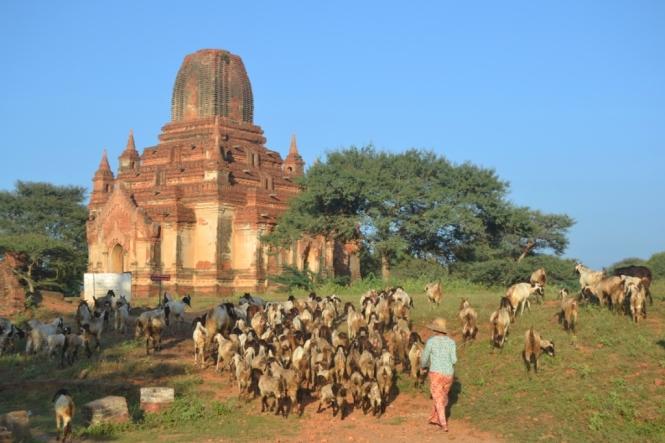 2019-11-myanmar-bagan-minnanthu-3